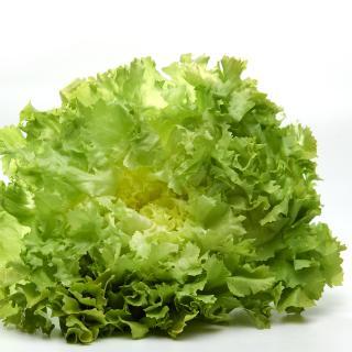 Salat Endivie vom Hof