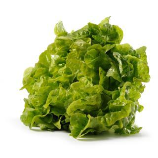 Salat klein Singlesalat vom Hof