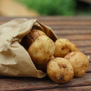 Kartoffeln Linda vom Hof