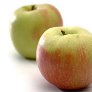 Äpfel Finkenwerder Herbstprinz aus Sommerland